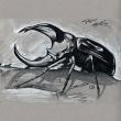 IMG_Rhino_Beetle_01