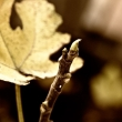 fall_series_03