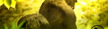 Galiwango Film Update | 3D Fur/Hair Study