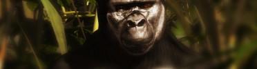 Galiwango Film Update | Trailer