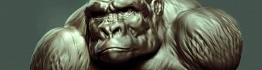 Silver Back Gorilla Sculpt, Zbrush