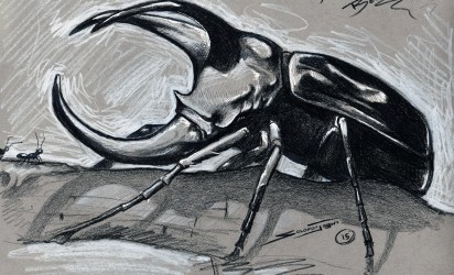 Drawing ~ Rhino Beetle