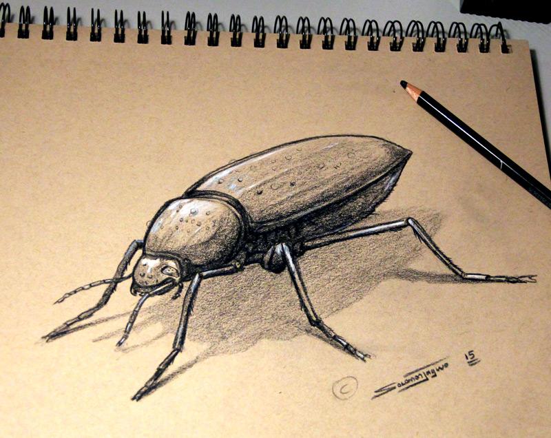 beetle_study_Solomon_W_Jagwe_F