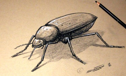 Beetle Drawing, Tan Sketch Paper